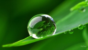 one_perfect_dew_drop-1574651