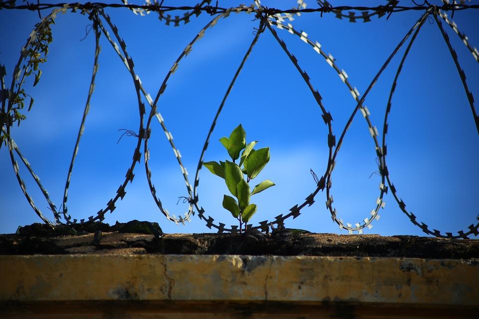 peace-recidivism